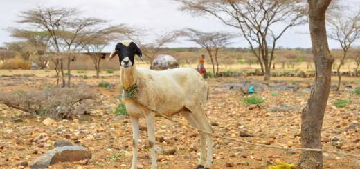16 väčšina obyvateľstva sa živí pasením dobytka (1)