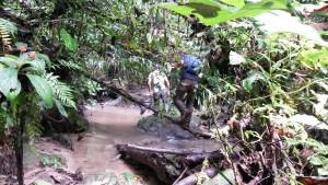 Prechádzka v džungli